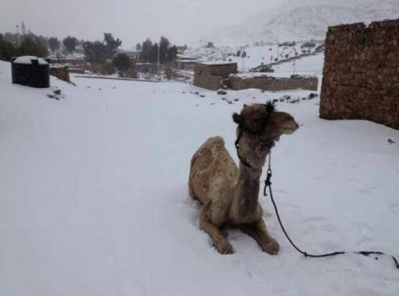 GlobalCooling-snow-in-Cairo
