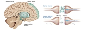 dopamine-chart